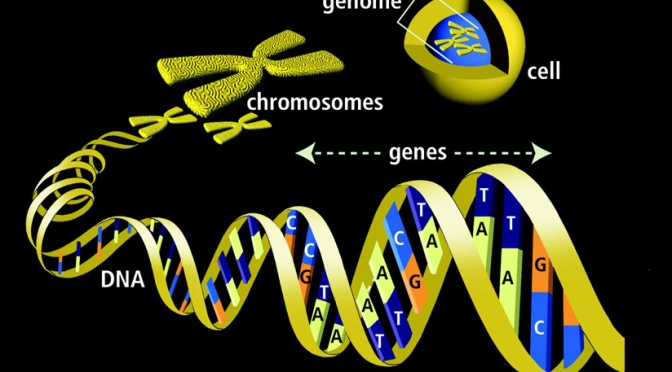 Genetic Cancer Theory Disproven