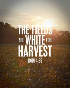 fields-white